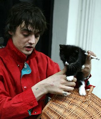 Pete Doherty Cat