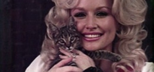 dolly parton cat