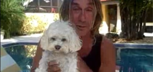iggy_pop dog